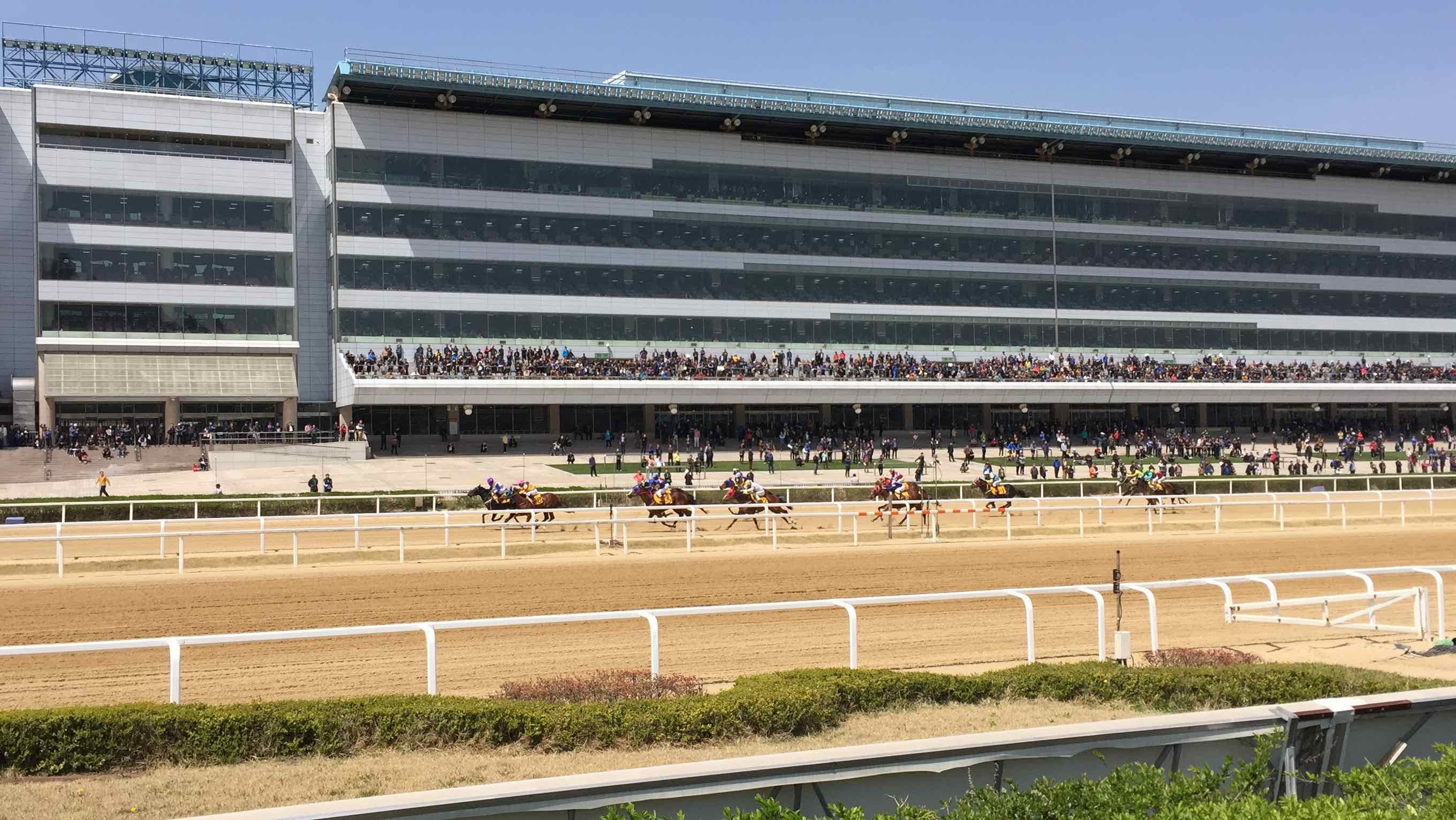 Horses running at the track in Seoul